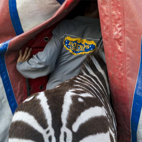 A Nomadic Circus | Eotvos