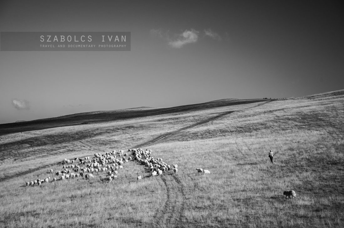 TRANSHUMANCE - THE STORY OF THE SHEPHERDS | by Szabolcs Ivan